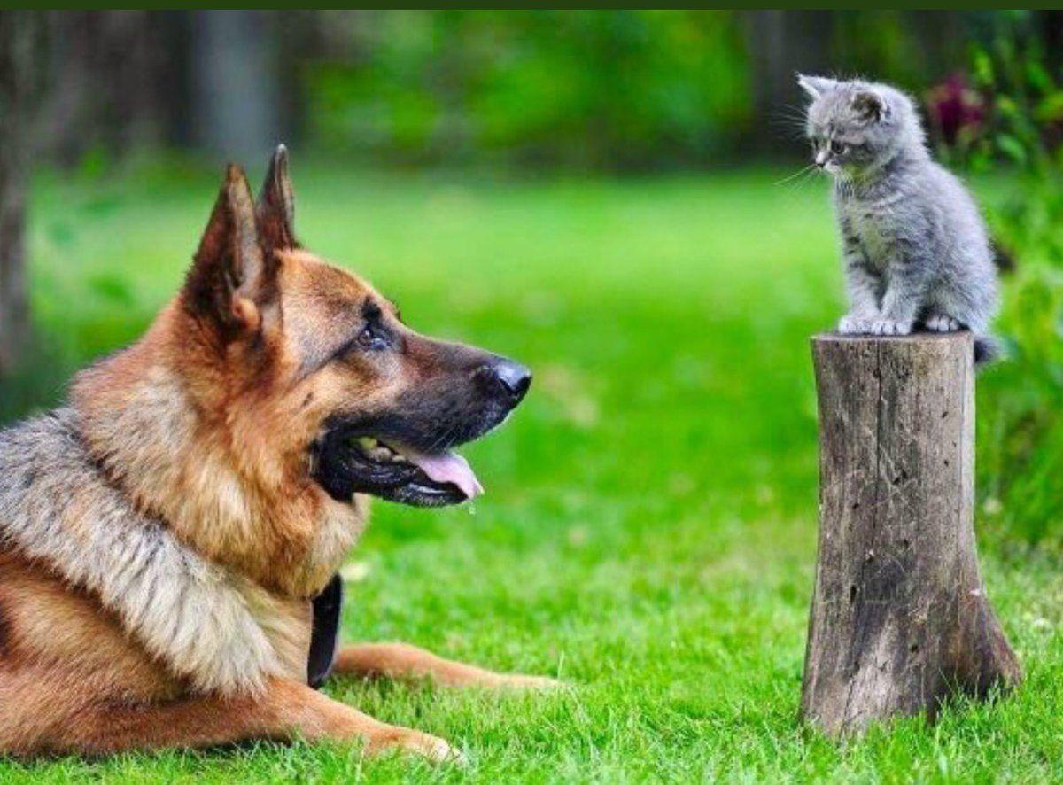 Cherie (sweetrhythms) Twitter Cat and dog memes