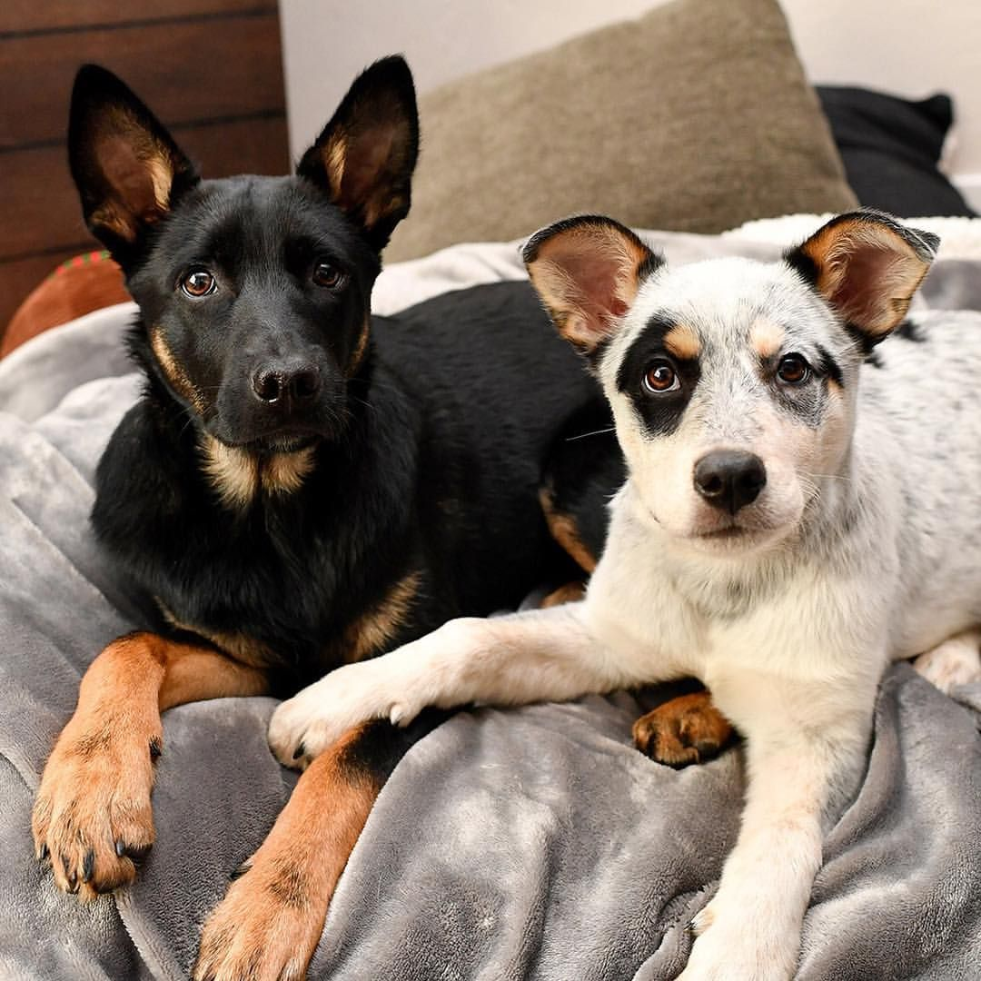 Good Pawsture Harlowandfosters Pet Dogs Dogs Dog Lovers