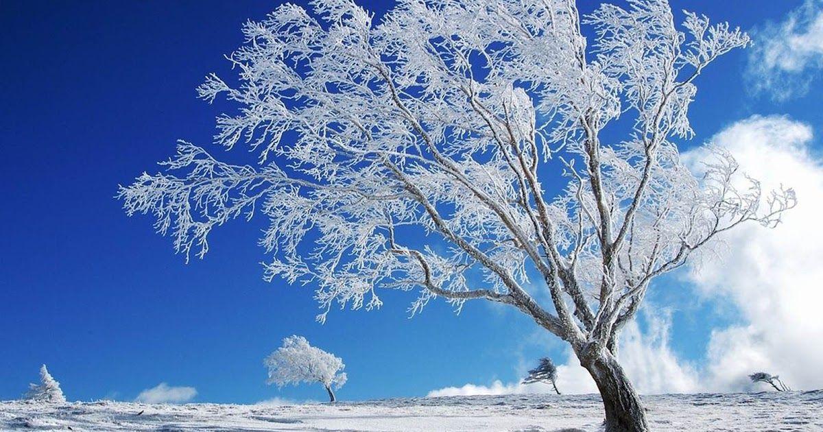 Pin By Laney Wright On Gacha Life Winter Desktop Background Computer Wallpaper Desktop Wallpapers Desktop Wallpaper Fall