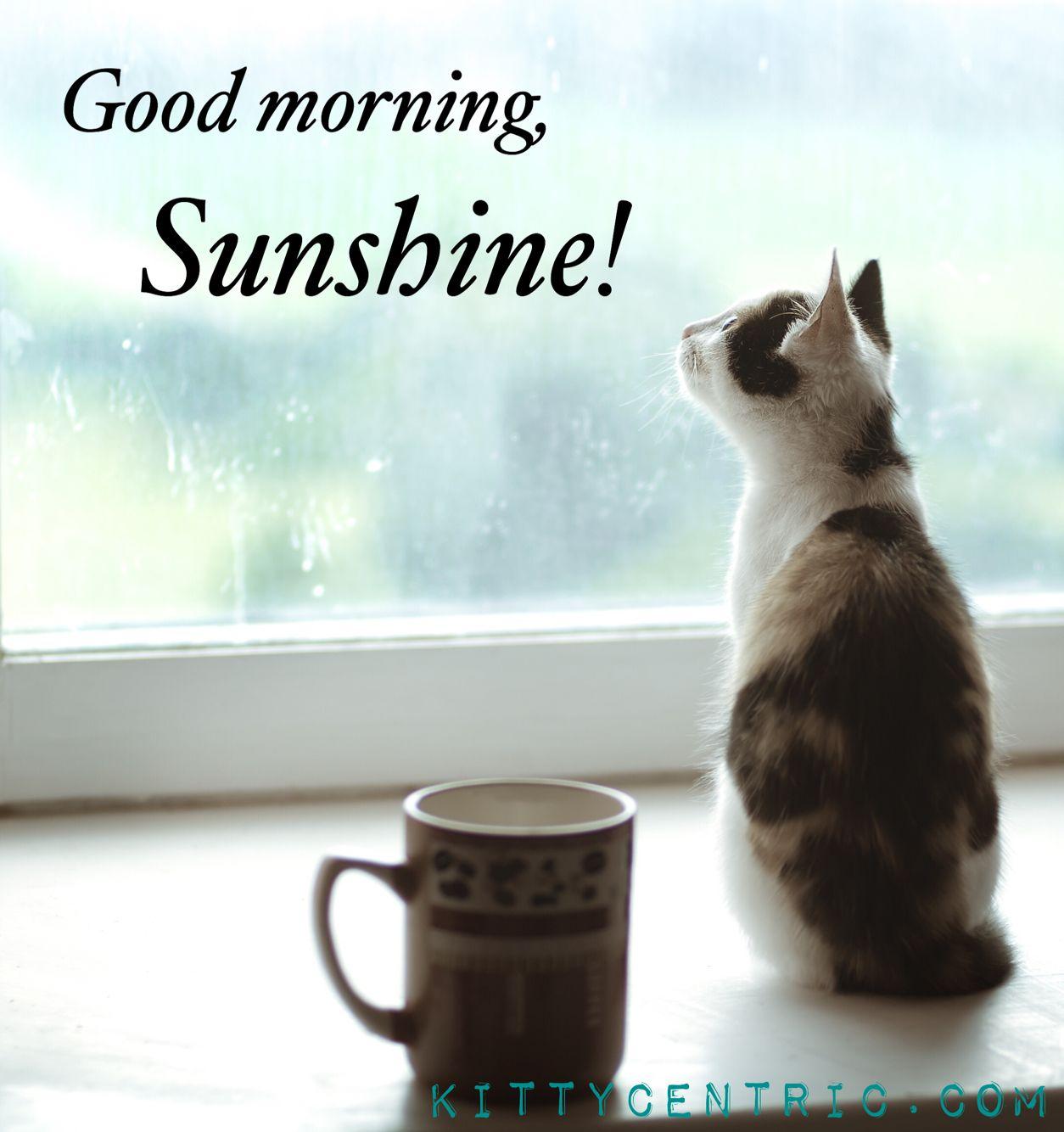 Good Morning Sunshine Cats Cat Catmeme Kittycentric Cats Beautiful Cat Cat Sitting