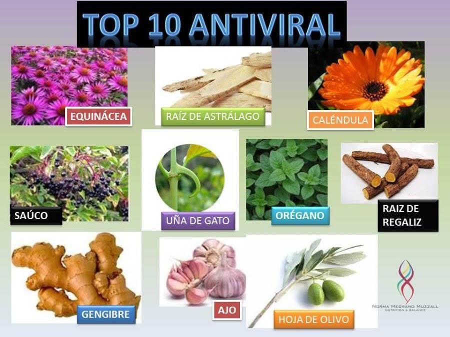 Top 10 Plantas Antivirales Con Imagenes Plantas Unas De Gato