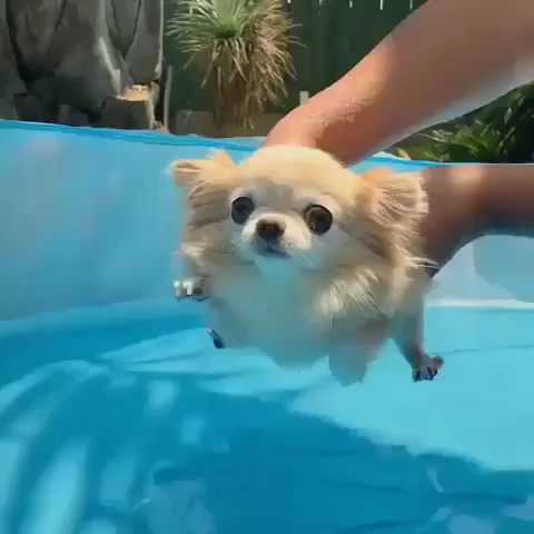 Water Floof