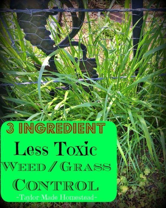 3 Simple Ings For Less Toxic Weed Control Bermuda Grgr