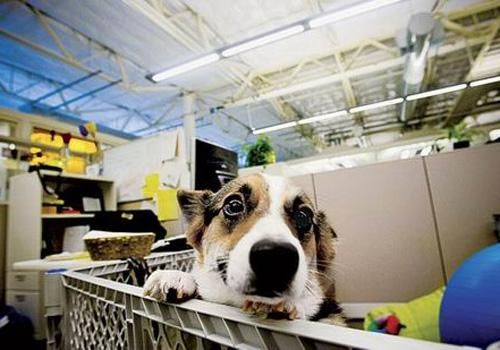 12 Companies That Let You Bring Your Dog To Work Working Dogs