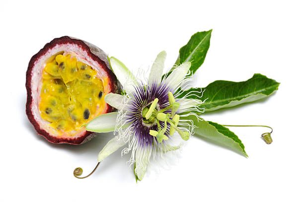 Passion Fruit Stock Photos And Pictures Passion Fruit Fruits Photos Fruit
