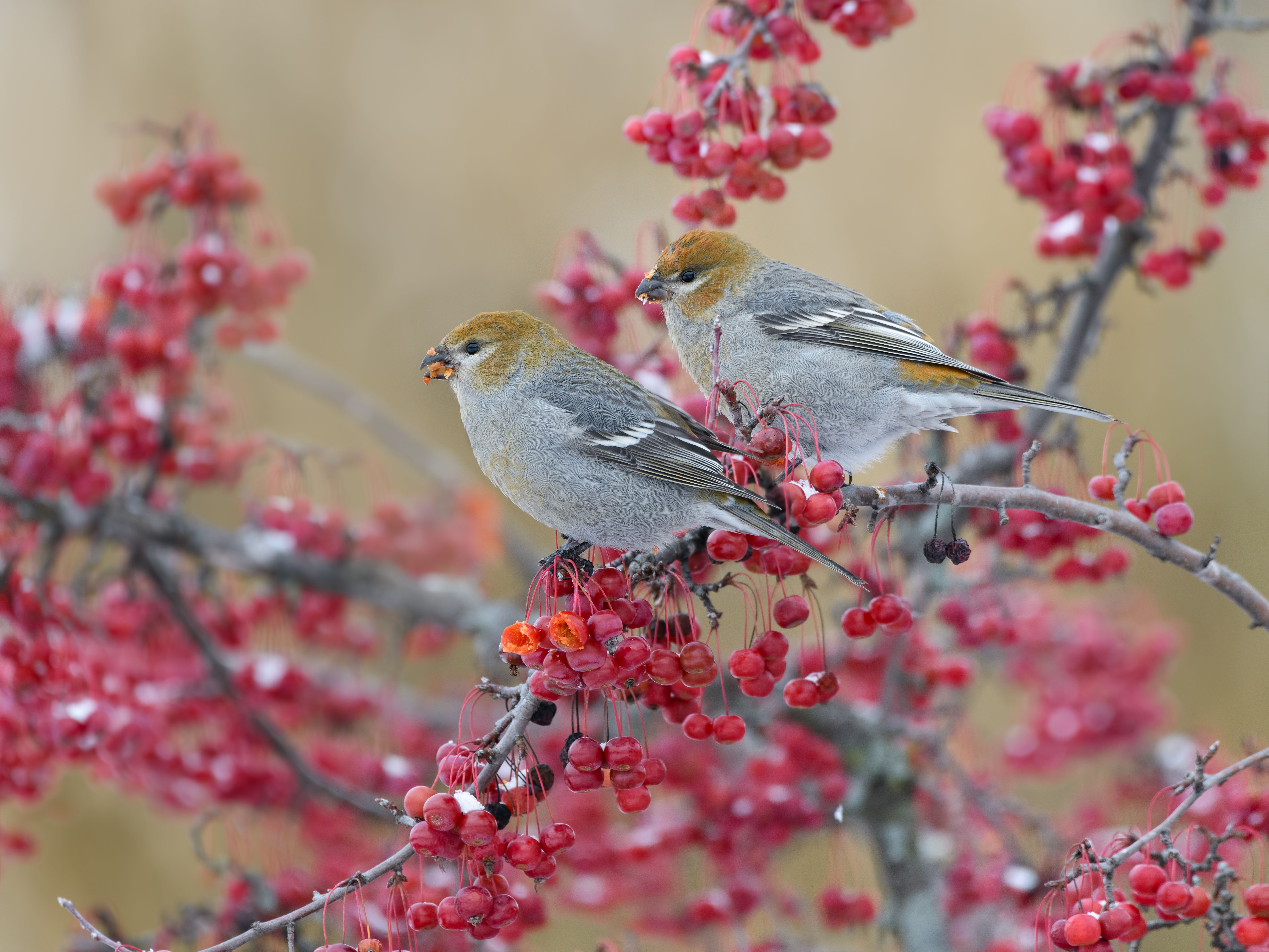 Citizen Science Projects | Great backyard bird count ...
