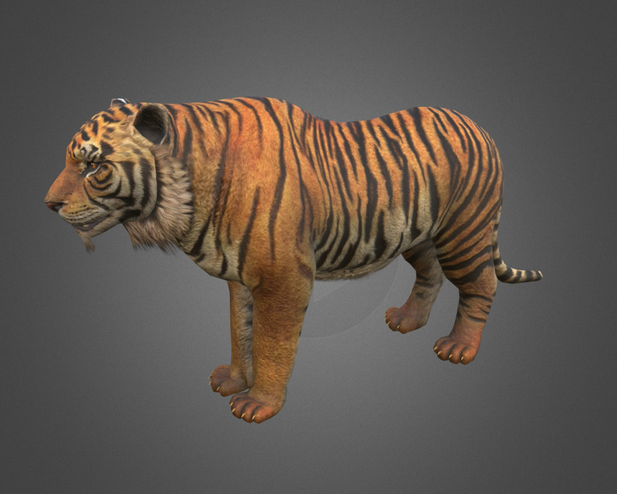 Low poly Tiger Animated. This royalty free 3D model or