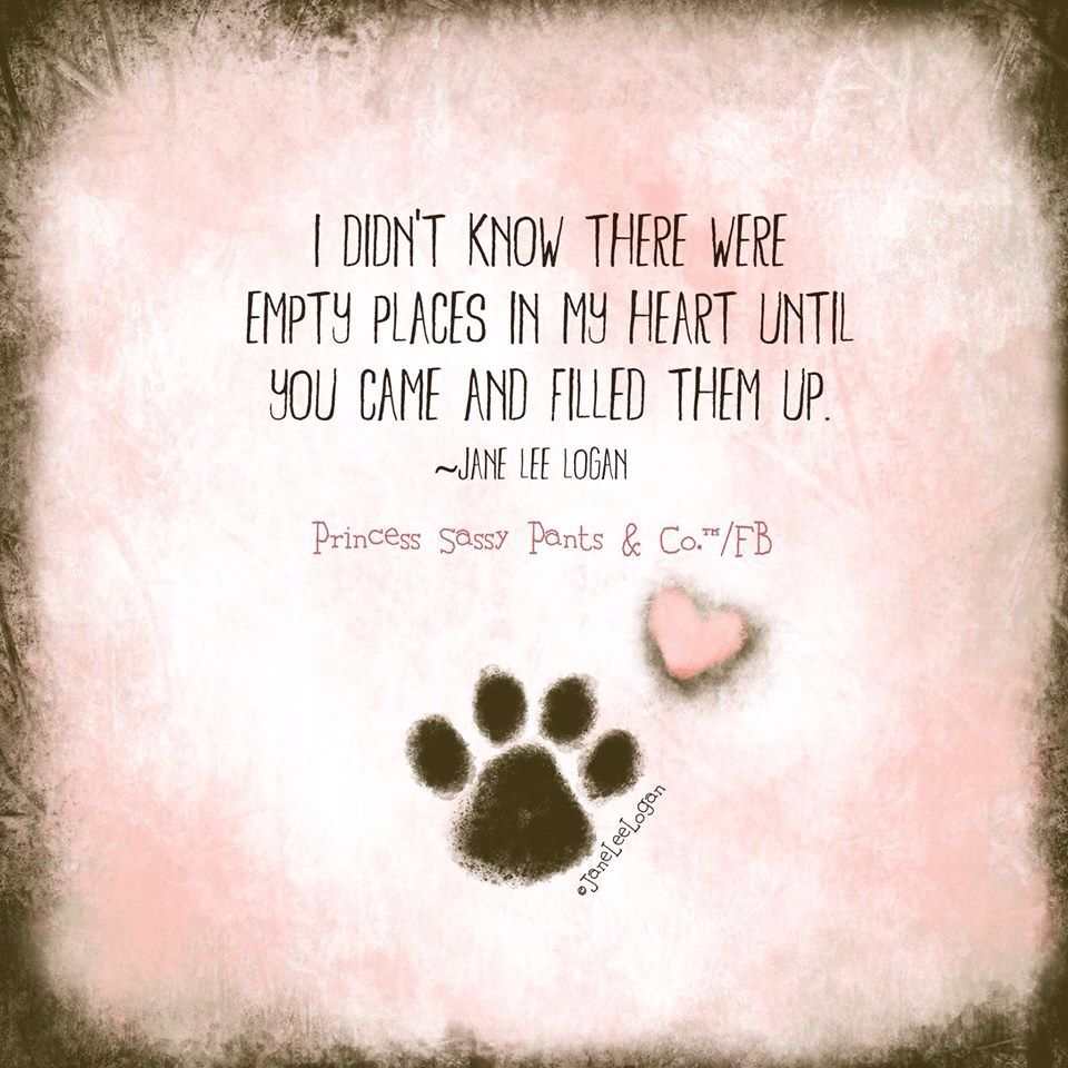 Dog Quotes Love, Dog Quotes, Dogs