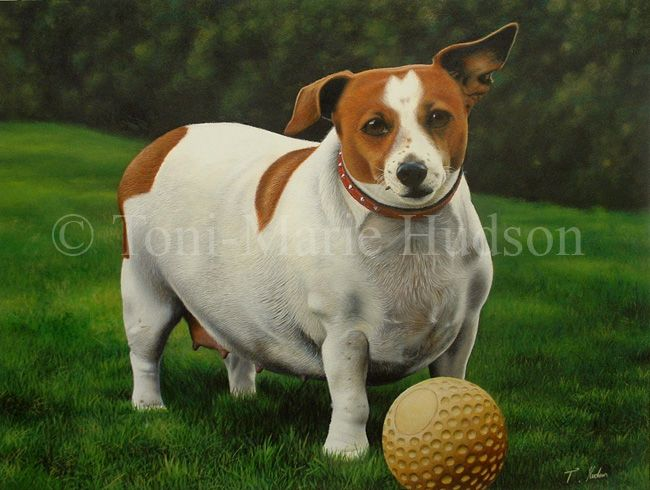 Meg Jack Russell Terrier By Canis Lupess On Deviantart With
