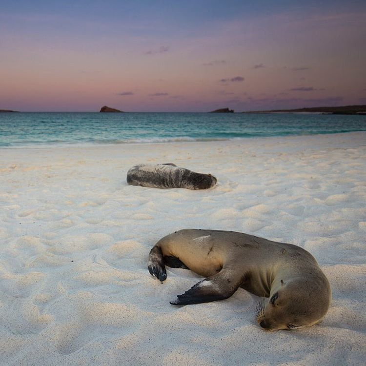 """Jeff Bartlett on Instagram: """"While I was exploring the coast, @brendanvanson was exploring the Galapagos with @ecuadortravel Team USA and grabbing stunning wildlife images all day long. Check out @brendanvanson for more images from those islands! #feelagaininecuador"""""""