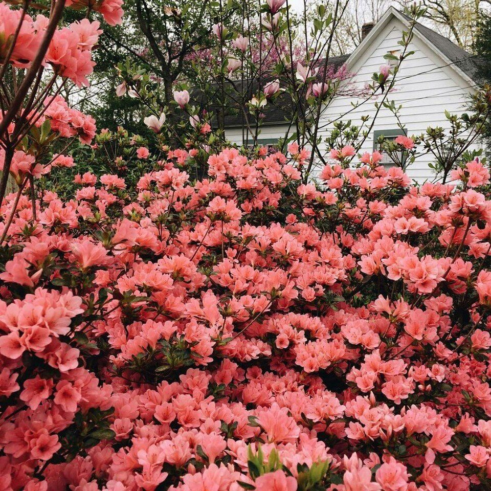 Pin By Sofia Eissa On Roses Pinterest Flowers Plants And