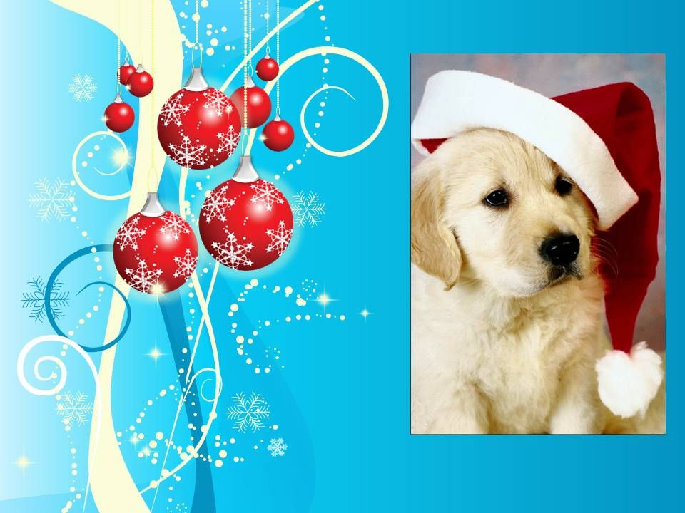 Holiday dog (created for use in Power Point presentation in clinic lobby while throwing in educational content for clients.)