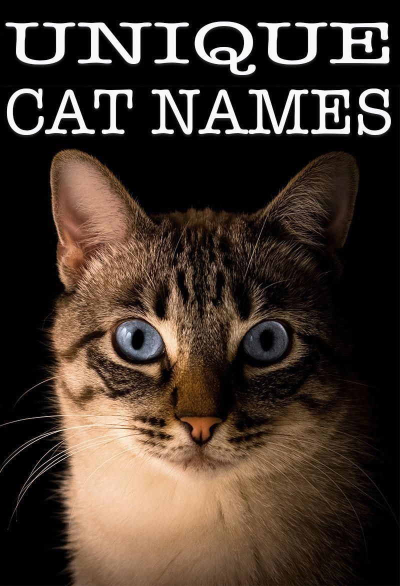 Unique Cat Names Over 140 Unusual Names For Your New Cat