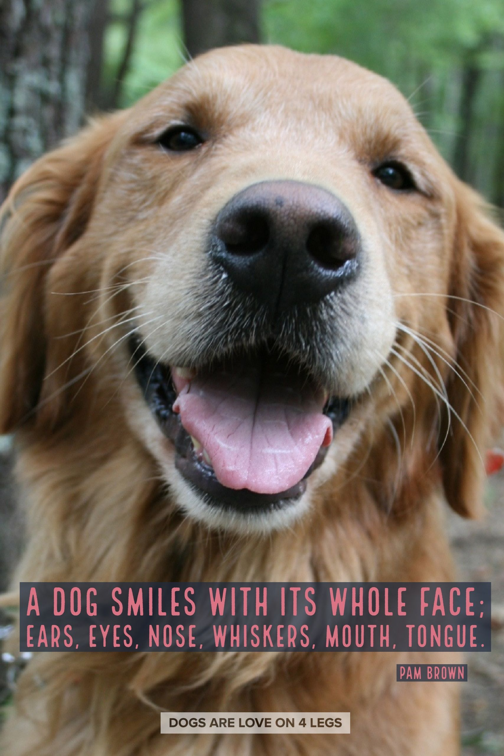 Dog Quote A Dog Smiles With Its Whole Face Dog Dog Quotes