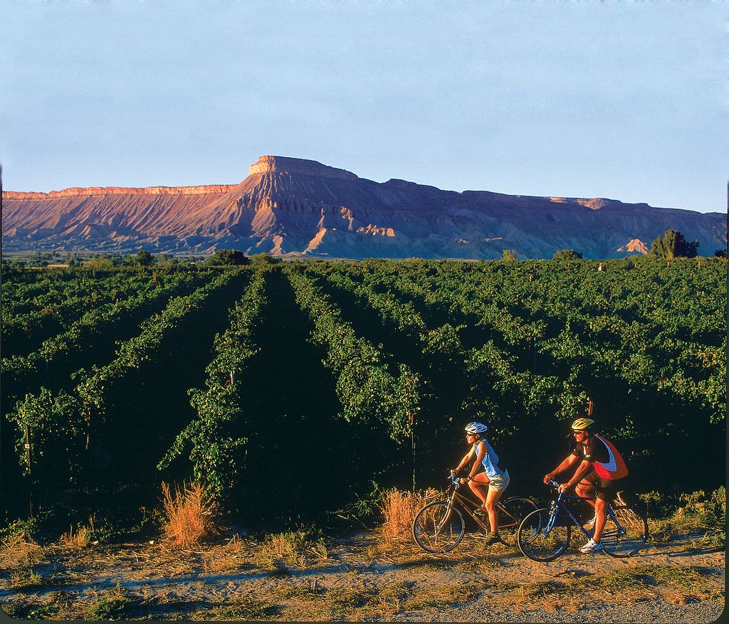 Biking through vineyards in the Grand Valley with the Book Cliffs in the background. | Grand Junction.