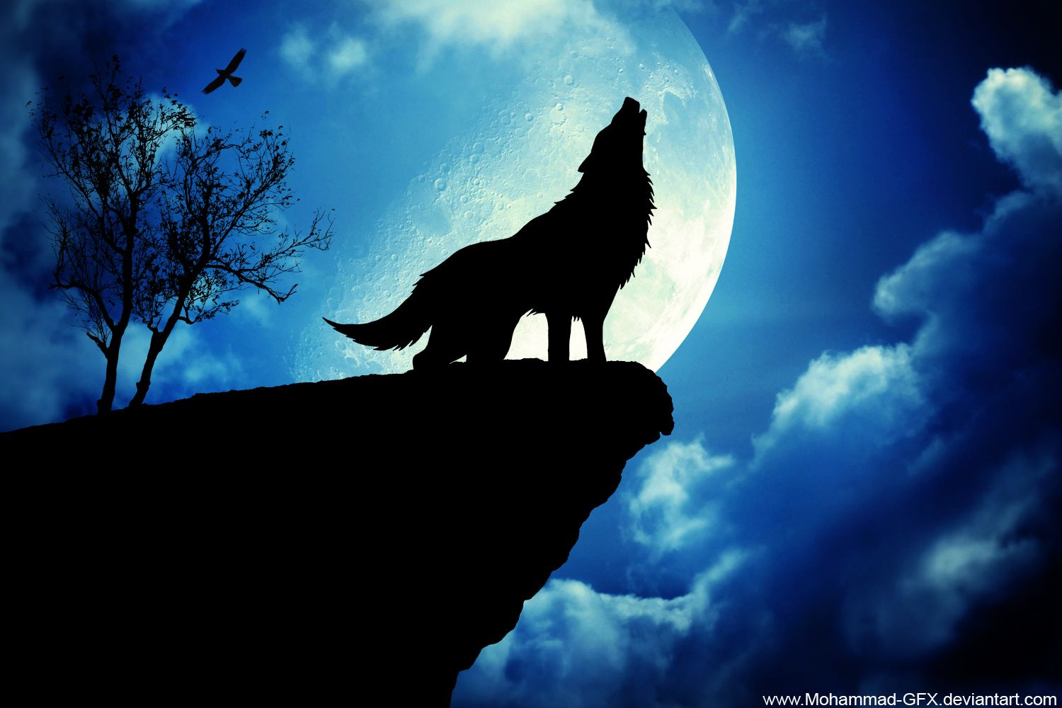 Hd wallpaper wolf - Download Exclusive Wolf Wallpaper Wallpaper Full Hd Wallpapers