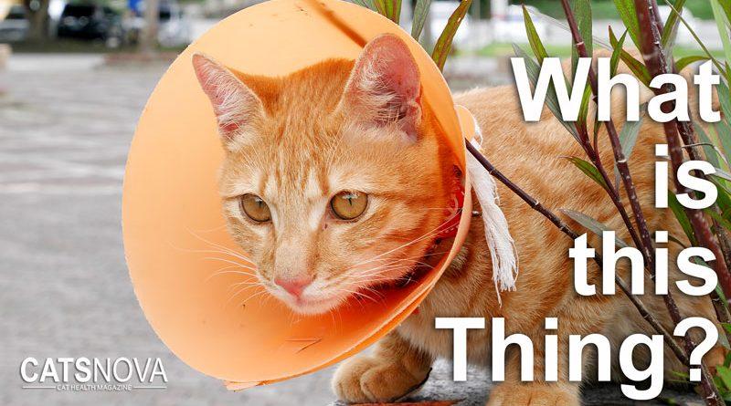 d38f30e0f5a48bae5f68dbda68a49f17 - How To Get My Cat To Wear A Collar
