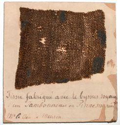 Fragment de tricot, 18ème Museum d'Histoire naturelle, Neuchâtel