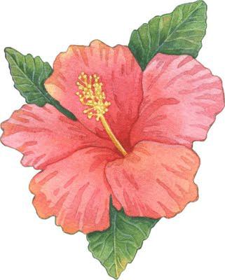 Dibujos de flores  Ilustraciones  Pinterest  Clip art Flowers
