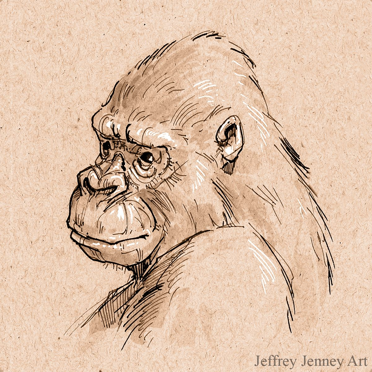 gorilla pen and ink animal drawings from the zoo pinterest