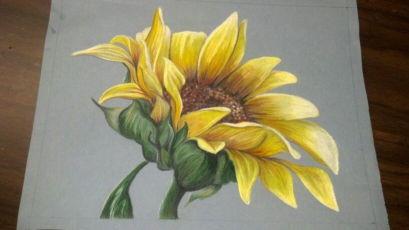 My Colored Pencil Sunflower Flower Drawing Sunflower Drawing Flower Sketches