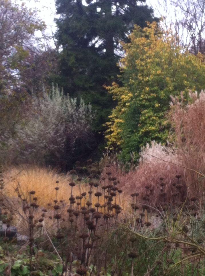 Perfect Botanischer Garten Z rich