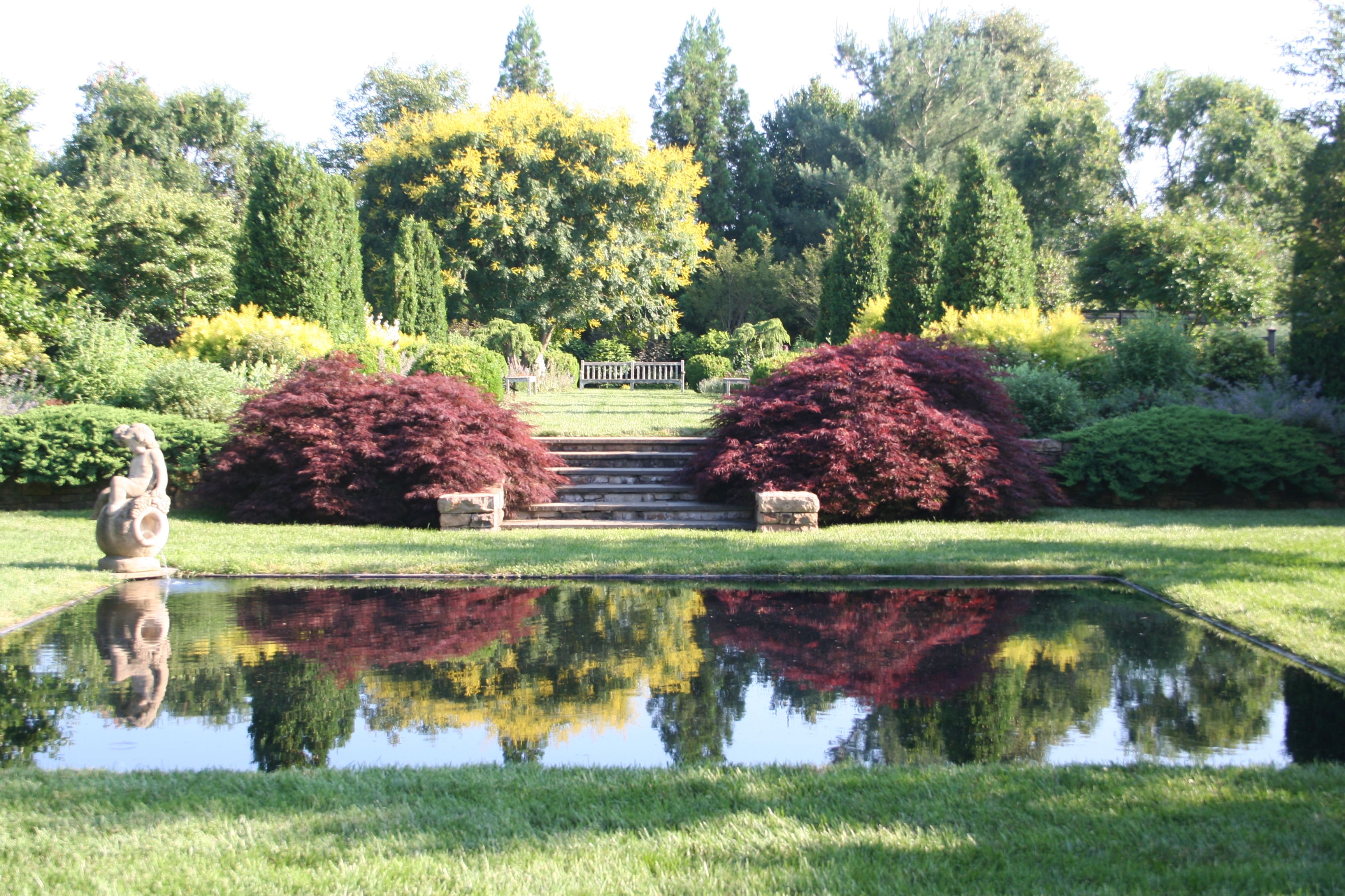 Golden Rain Tree In Reflection Pool Garden Inspiration Japanese Garden Italian Garden