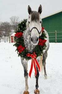 A Place In The Country Christmas Horse With Wreath And Red Ribbons Around Its Neck Pretty Dapple Grey