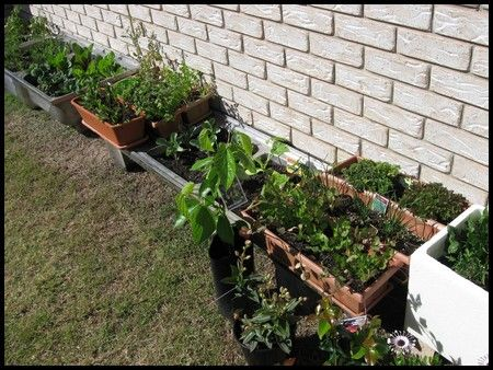Growing Vegetables In Containers   Container Vegetable Gardening  Instructions