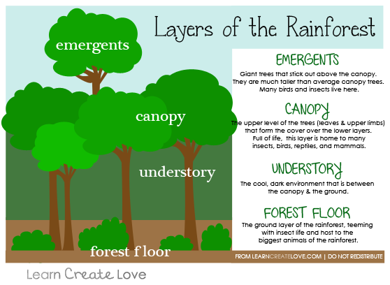 amazon rainforest layers diagram single phase forward reverse wiring pin by learncreatelove com on crafts pinterest cool for earth day