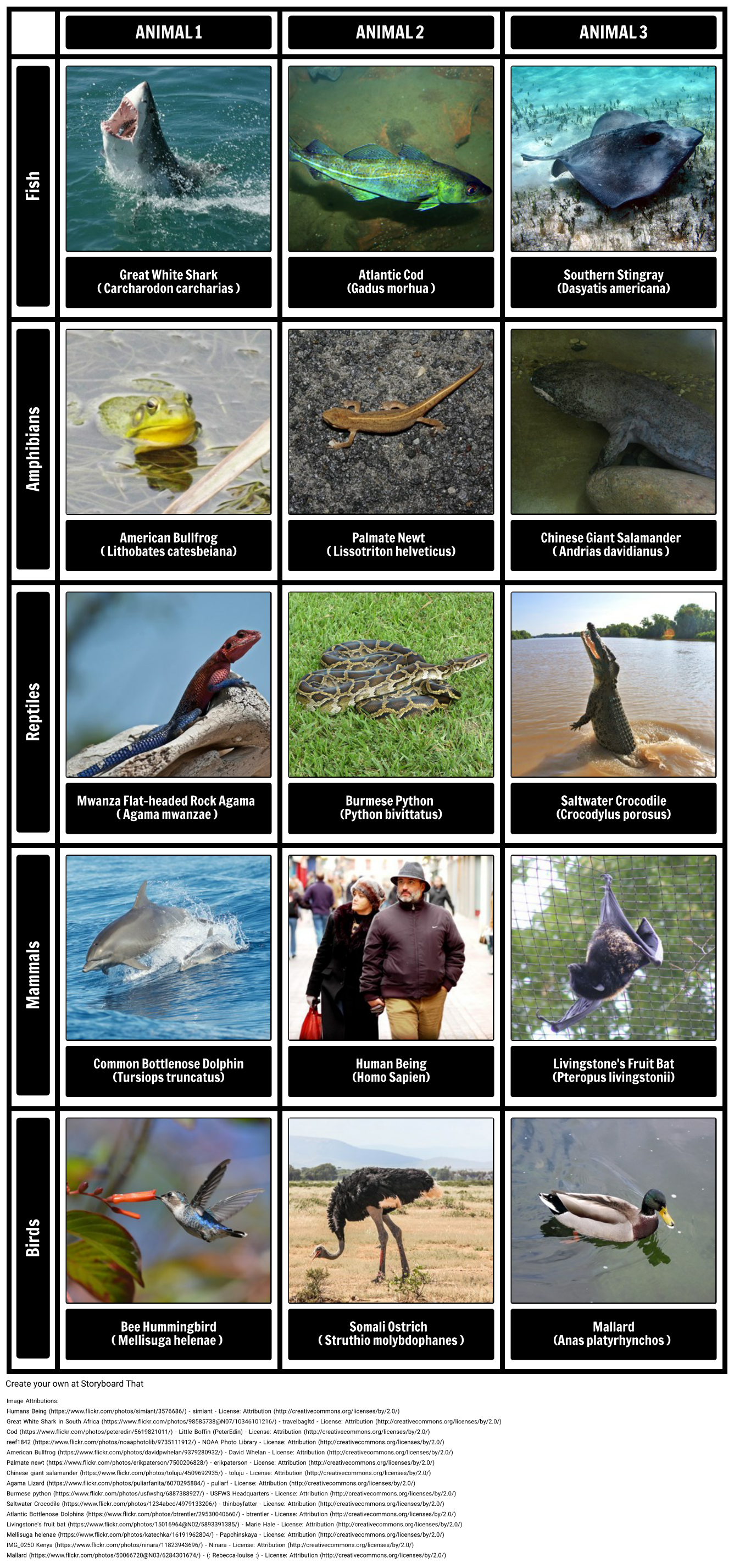 Examples Of Different Vertebrate Groups Vertebrates All Belong To