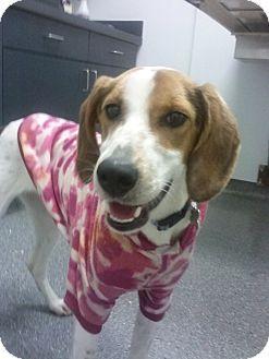 Richmond Va Foxhound Whippet Mix Meet Willow A Dog For