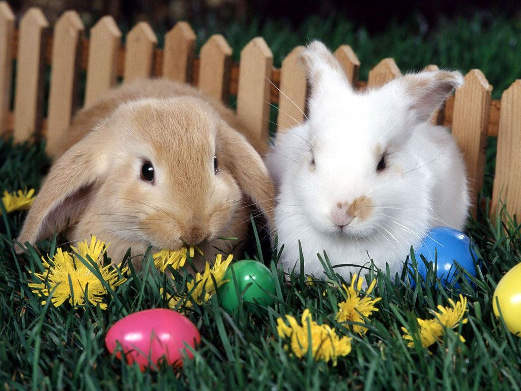 Pleasing Cute Easter Pictures With Rabbits Wallpaper Animal