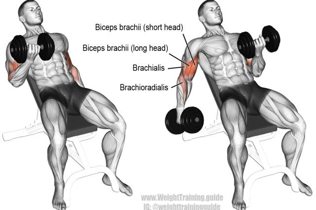 Incline dumbbell curl exercise (con imágenes) | Ejercicios de biceps, Ejercicios, Rutinas de entrenamiento