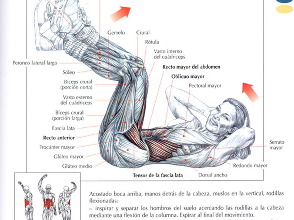 Mejores 54 imágenes de Gym en Pinterest | Abdominales, Cuerpo humano ...