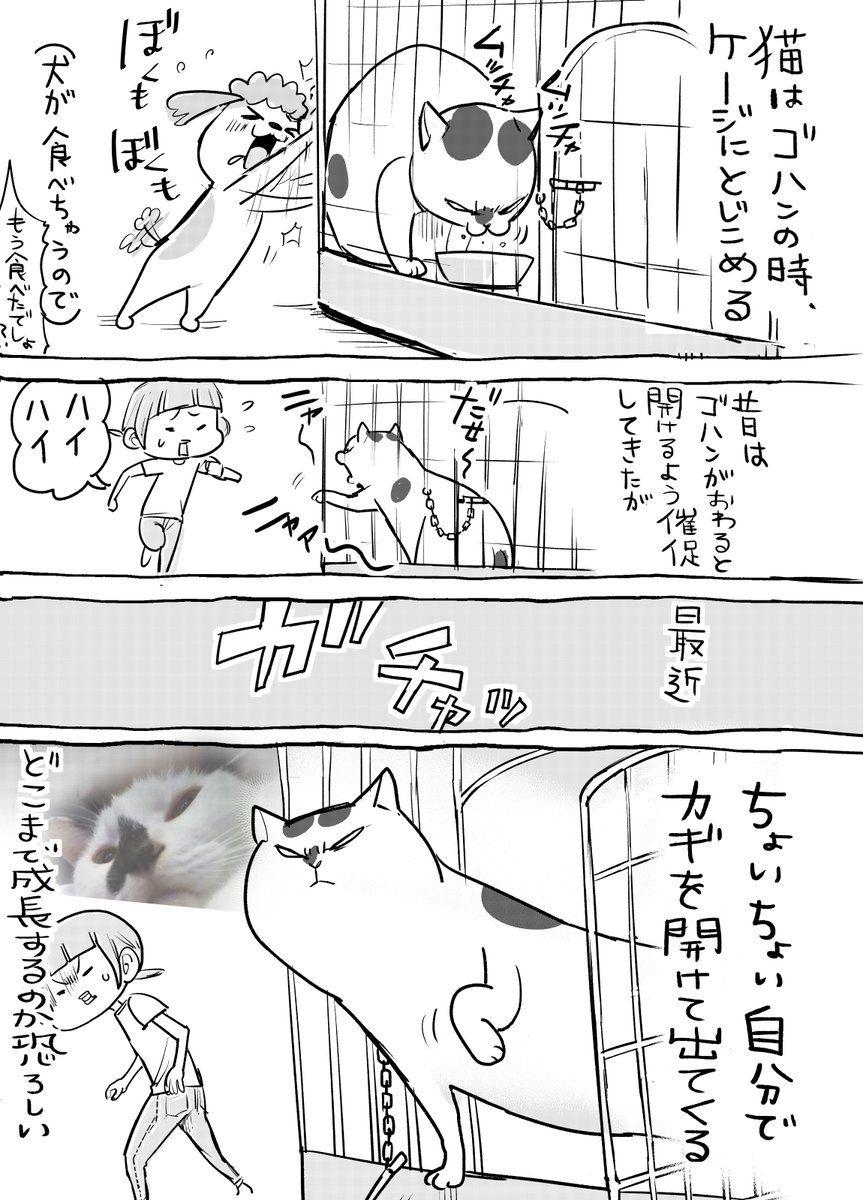 「(笑)」おしゃれまとめの人気アイデア|Pinterest |8 ka | Cat comics ...