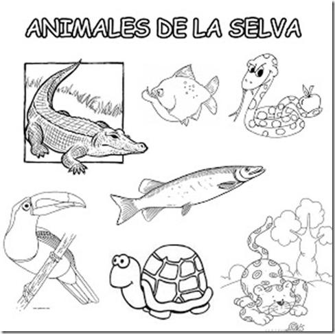 Animales De La Sierra Peruana Para Colorear Imagui Animals Comics Peru