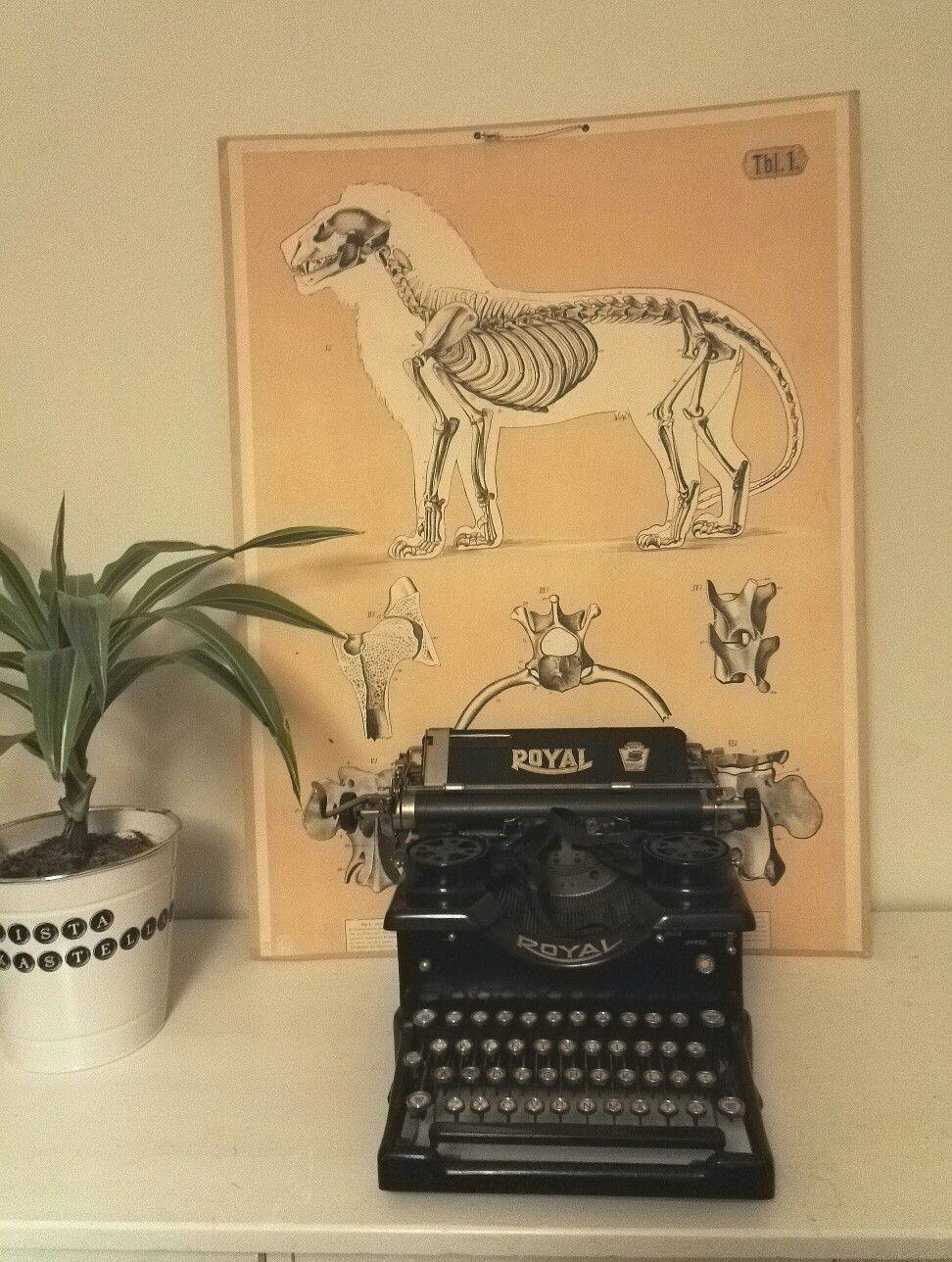 Olohuoneeseen vaarin lipasto, vanha Royalin kirjoituskone, leijonan anatomia-opetustaulu ja kirjovehka