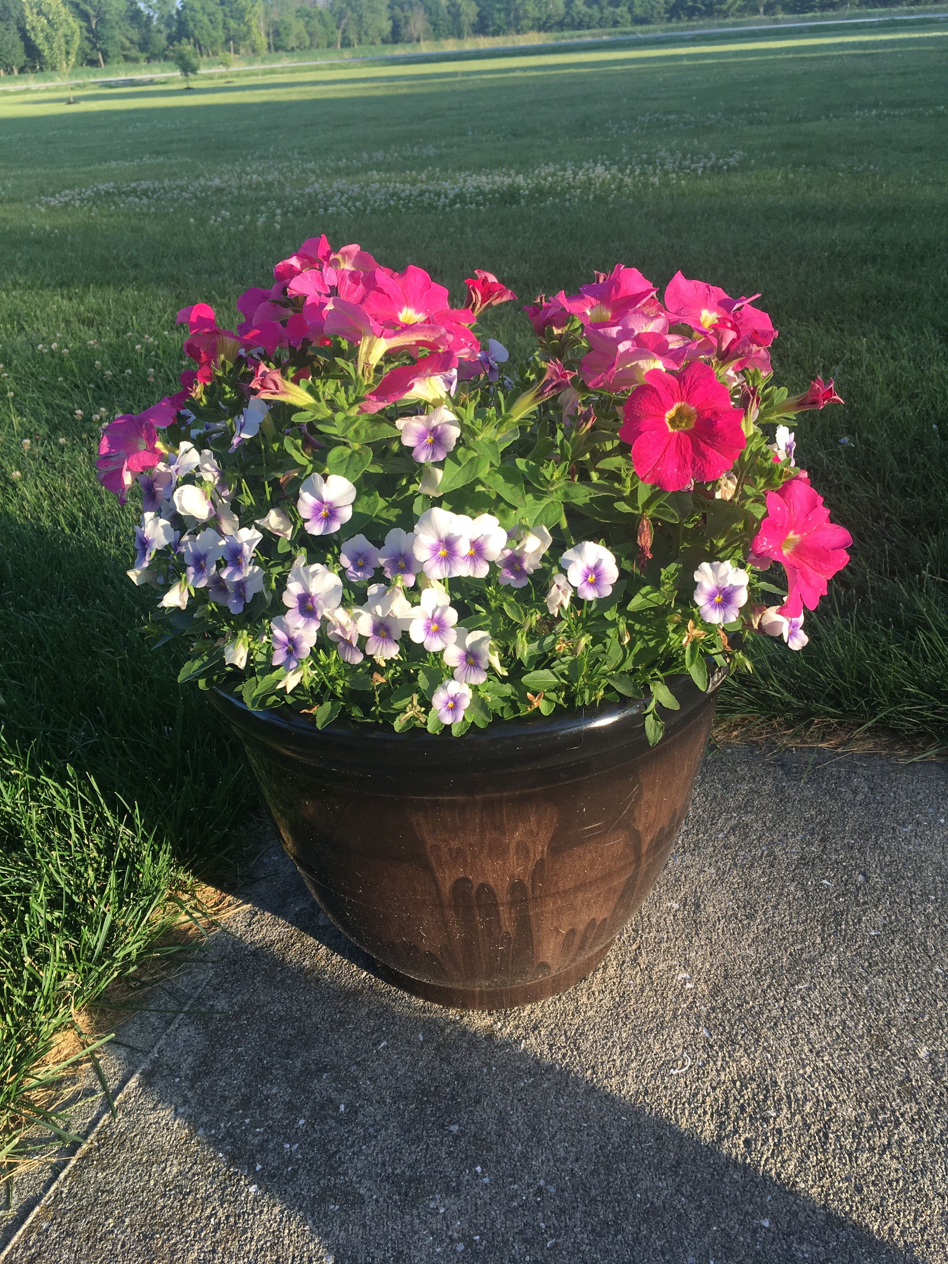 Summer flower pot! Flower pots, Hobby farms, Summer flowers
