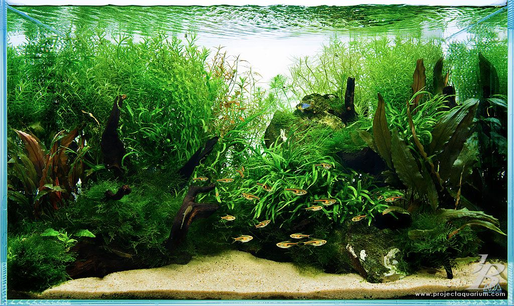 Merveilleux Convex Planted Freshwater Tank. Aquarium AquascapePlanted ...