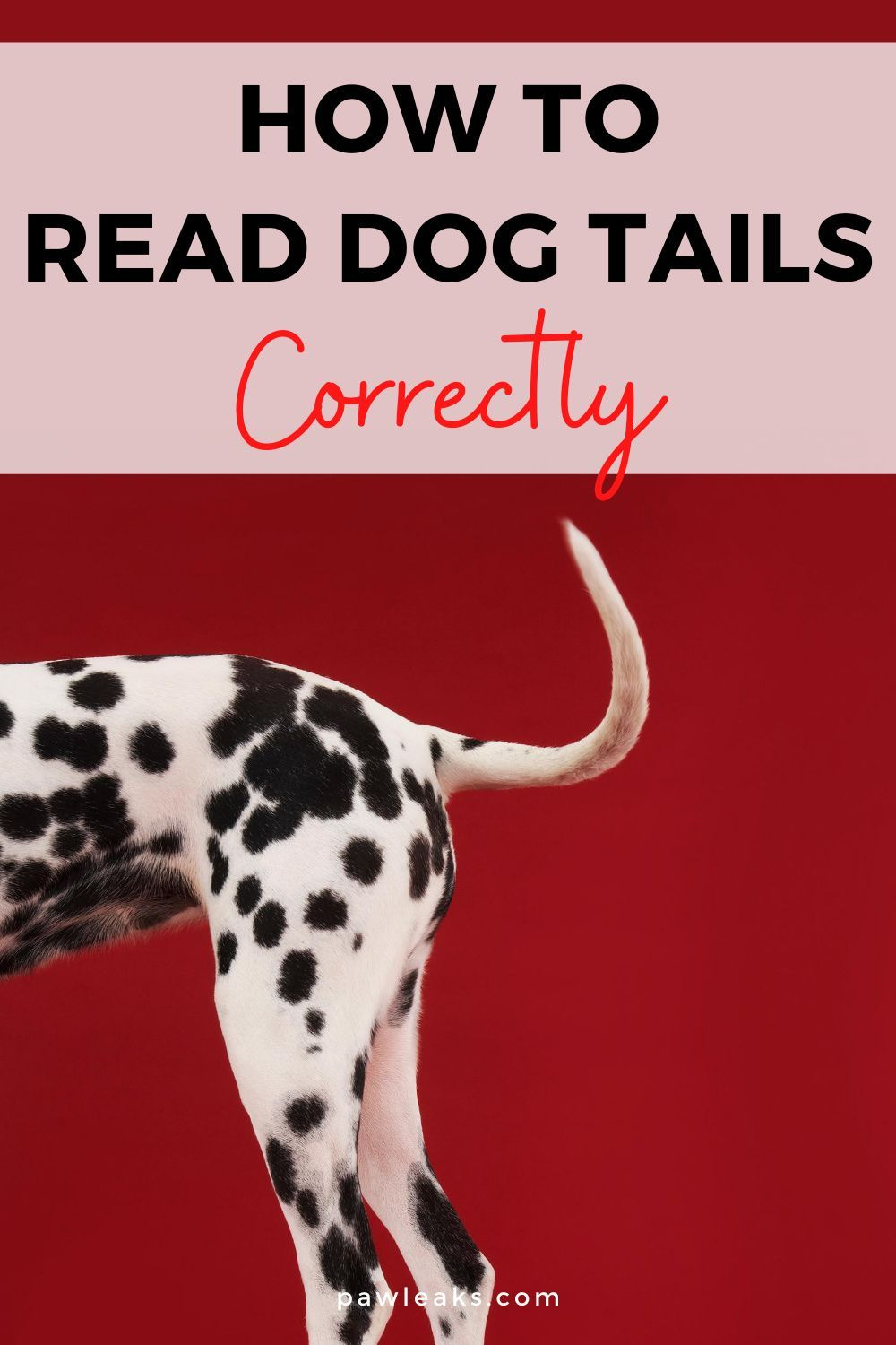 Dog Tail Down Or Up And Stiff Dog Tail Meaning Explained Dog Tail Dog Tail Meaning Dog Posture Meaning