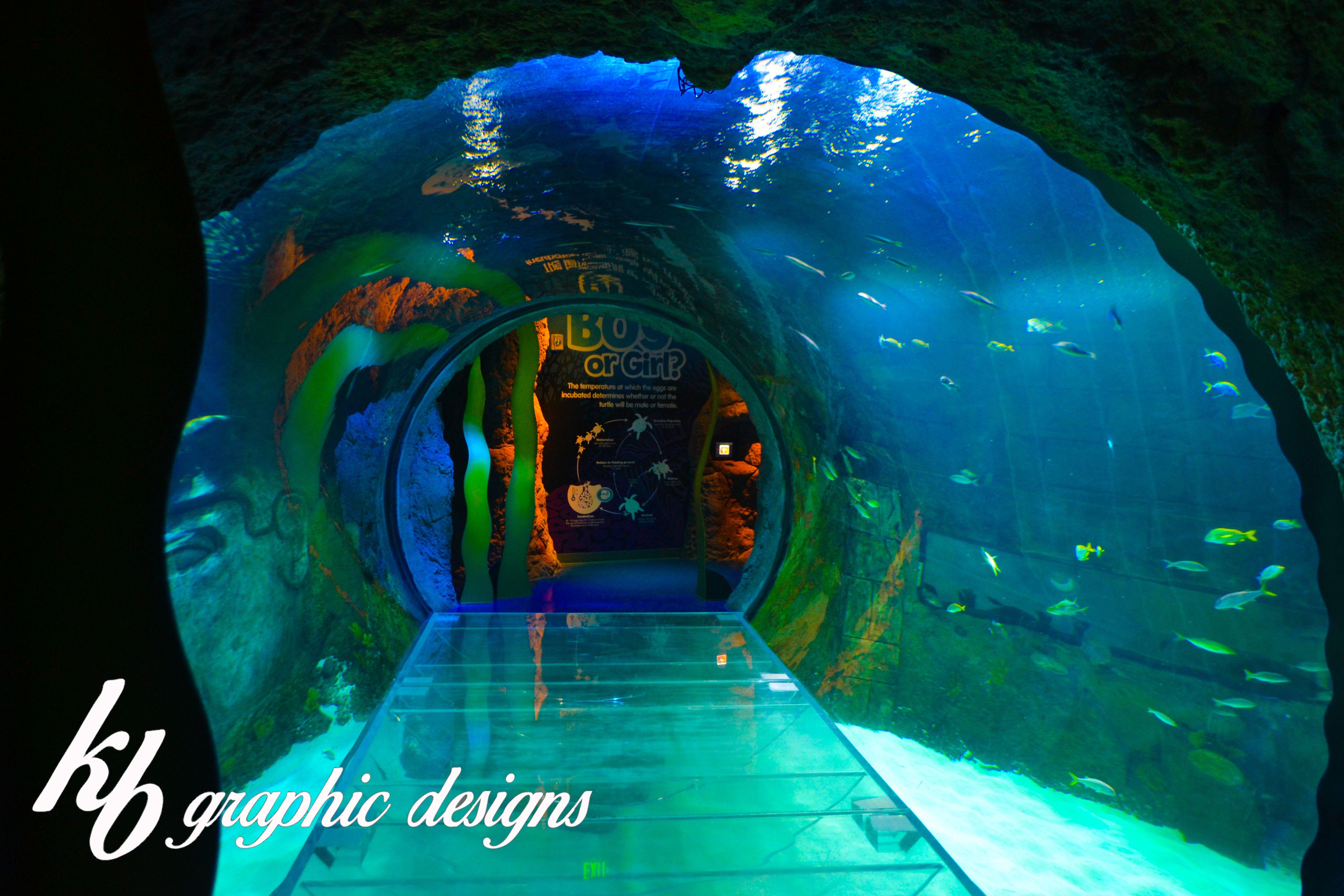 Sea Life Aquarium Orlando Fl. | Orlando vacation, Florida ...