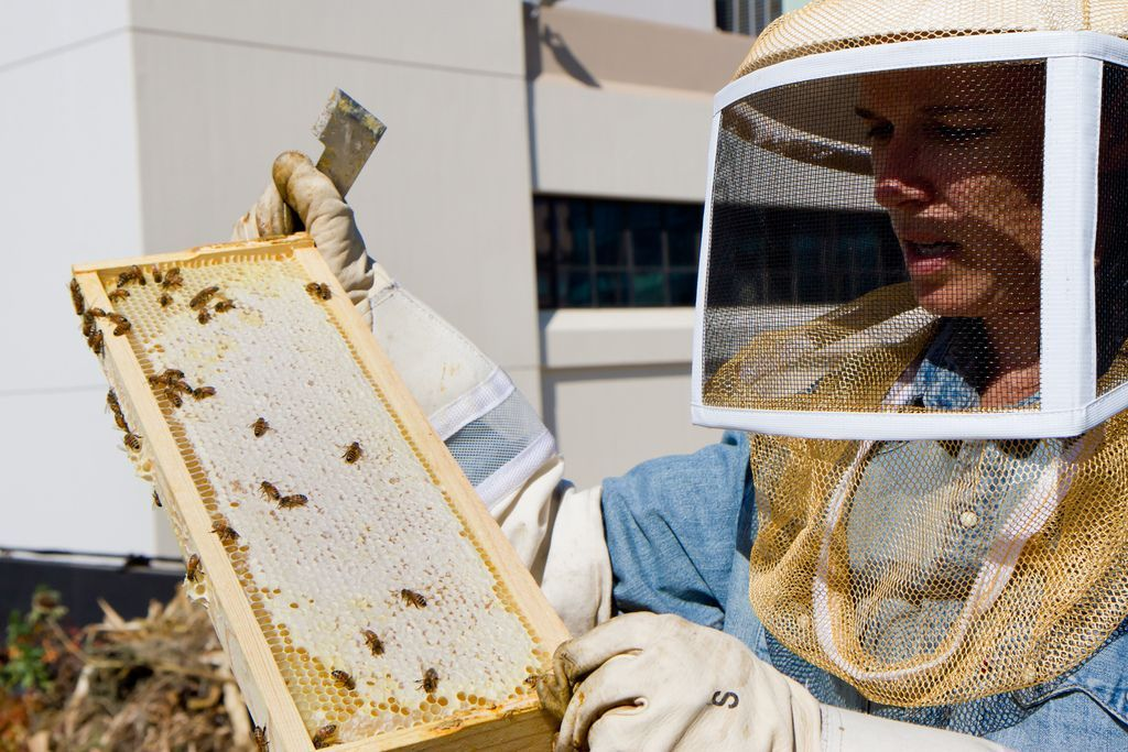 A Quick Guide to Starting a Beehive (With images ...