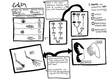 Evolution Coloring sheet and questions Evolution