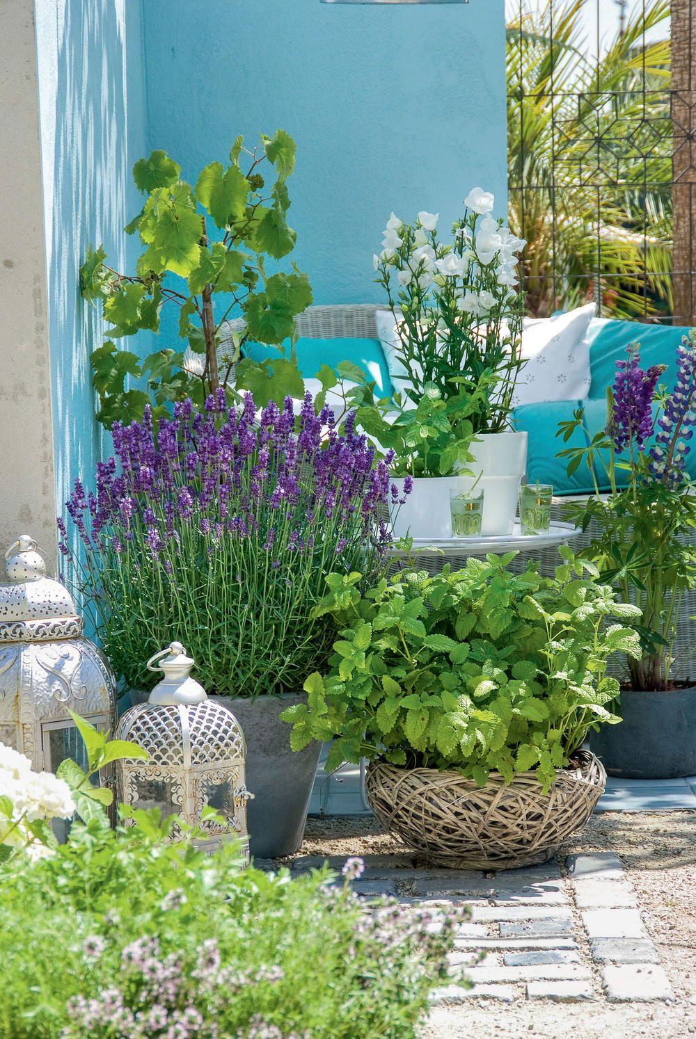 Ideen Mit Lavendel Vom Garten Bis Zur Kuche Bepflanzung Gartenprojekte Lavendel Pflanzen