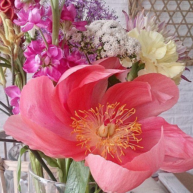 *POOF* Peonie: #peonie #pink #flowers