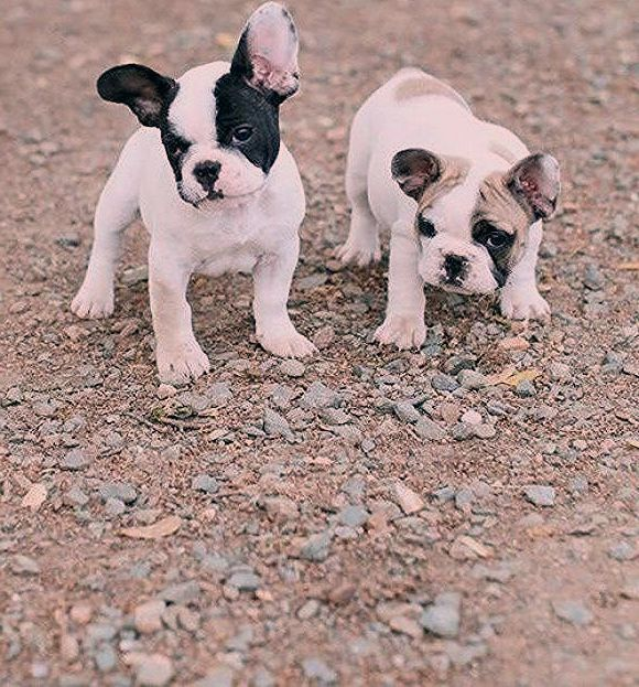 Photography Puppies