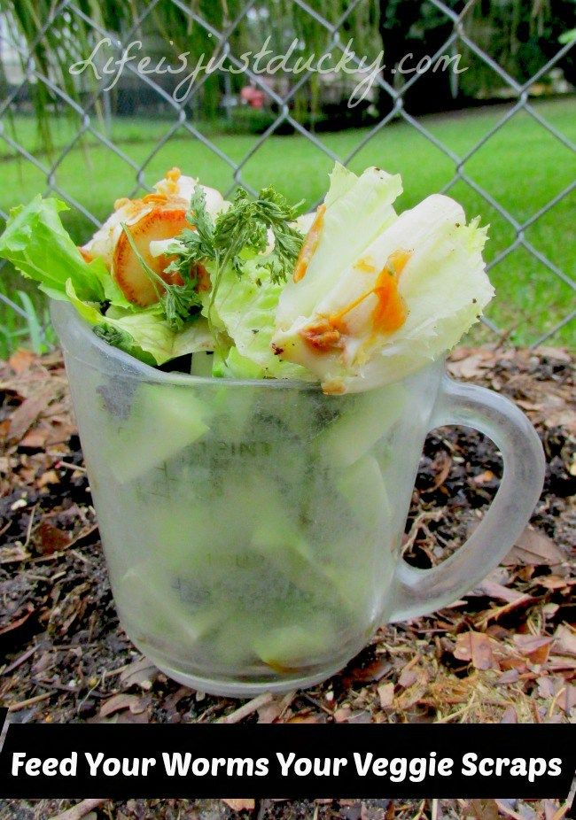 Your worms turn your veggie scraps into AMAZING Fertilizer ...