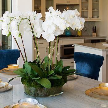 Blue Velvet Dining Chairs