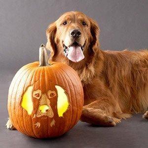 Awesome Jack O Lantern Dog Stencils Dog Pumpkin Pumpkin Carving